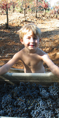 David Minor, Pete's grandson, holding a box of grapes